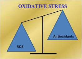 nerovnováha - podstata oxidač.stresu