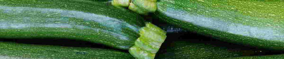 plody zelených cuket po sklizni