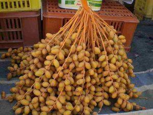 Čerstvě sklizené plodenství palmy datlové